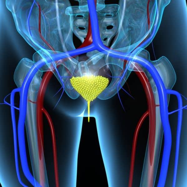 Mięśnie dna miednicy - budowa i funkcje mięśni dna miednicy