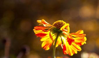 Klimakterium, menopauza