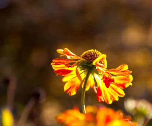 Menopauza - jak ją godnie i łagodnie przejść
