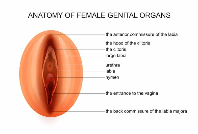 korekcja warg sromowych
