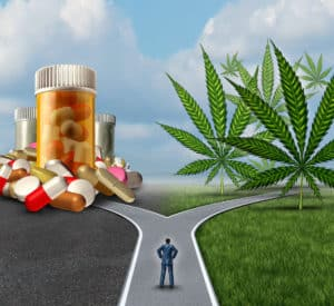 Marihuana medyczna nigdy nie jest lekiem pierwszego wyboru