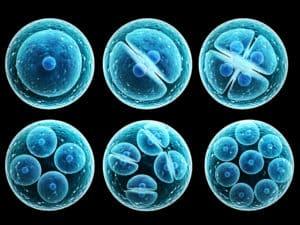 Mitoza komórkowa - IVF