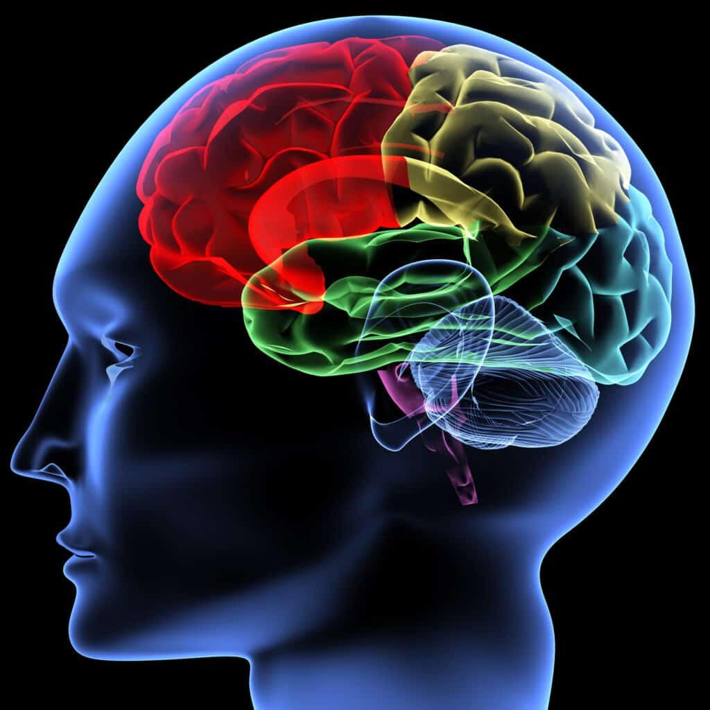 Mózg - apolipoproteiny